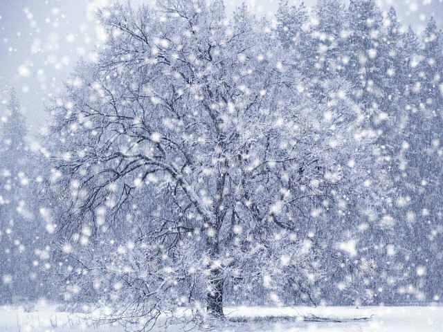 snowfall_1